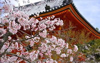 はじめまして、京都